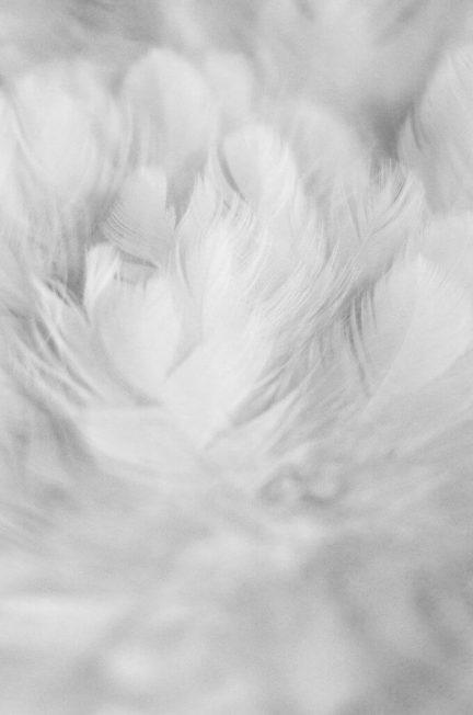 Piumino Tessuto BiOrganic